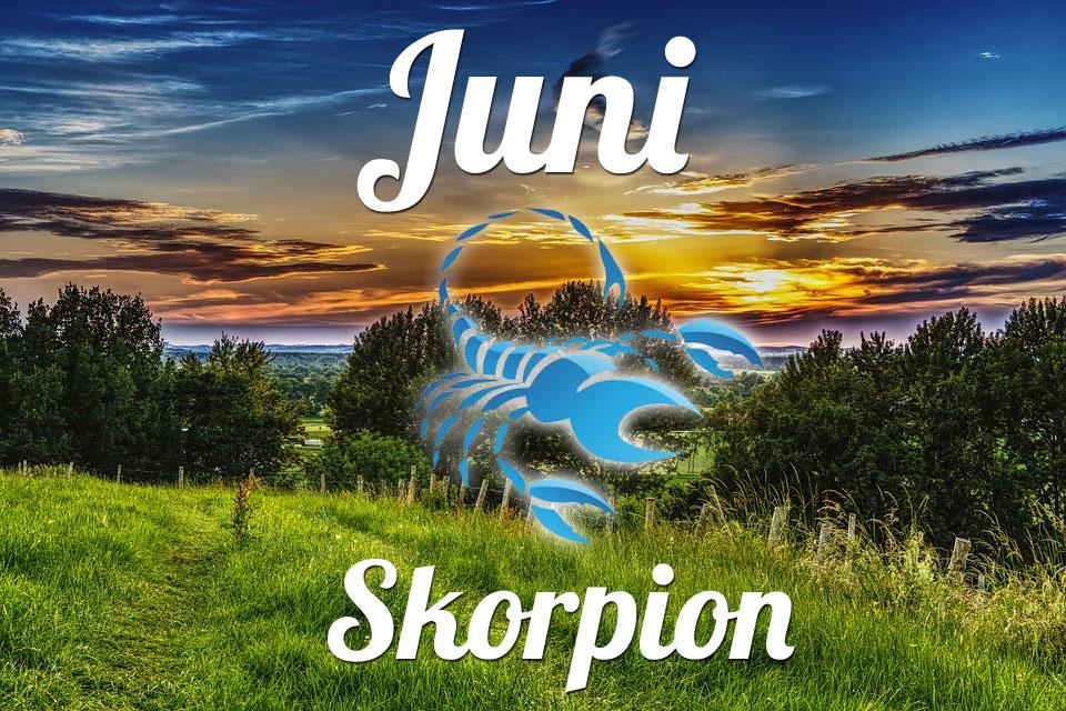 Skorpion Juni 2020