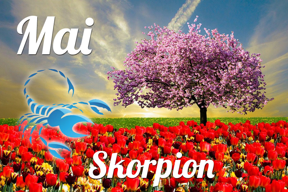 Skorpion Mai 2020