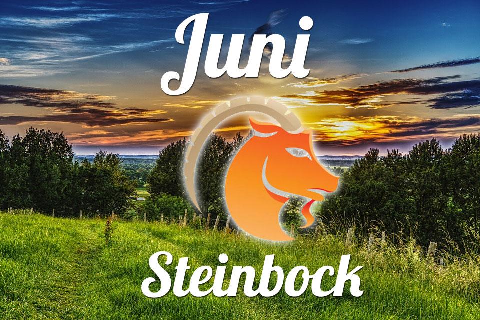 Steinbock Juni 2020