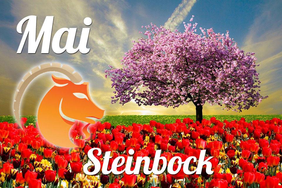 Steinbock Mai 2020