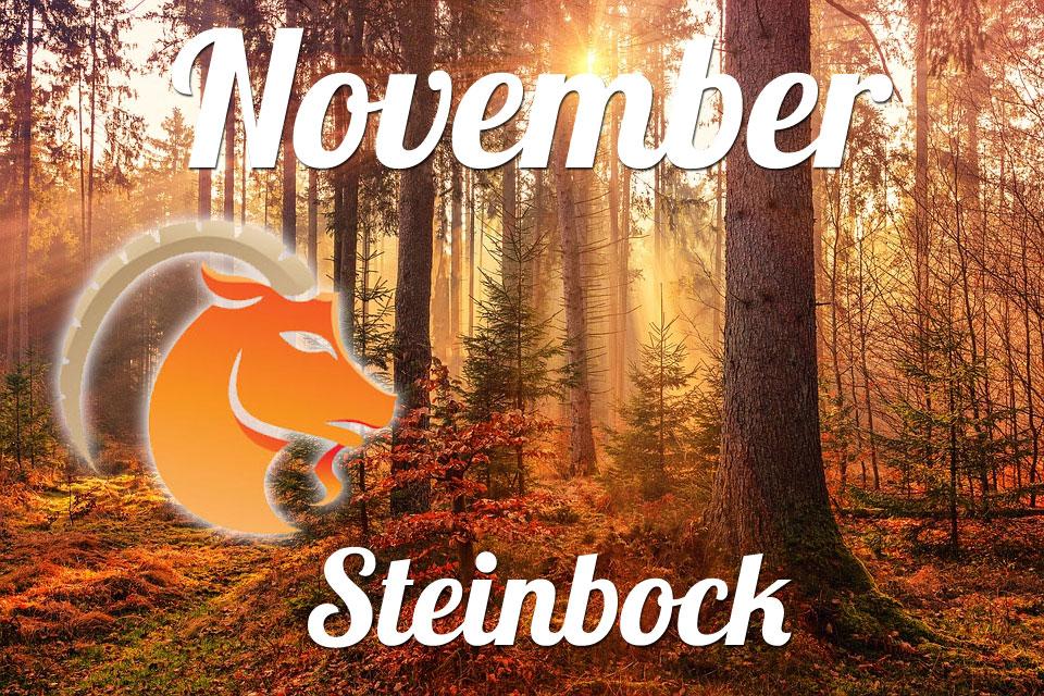 Steinbock November 2020