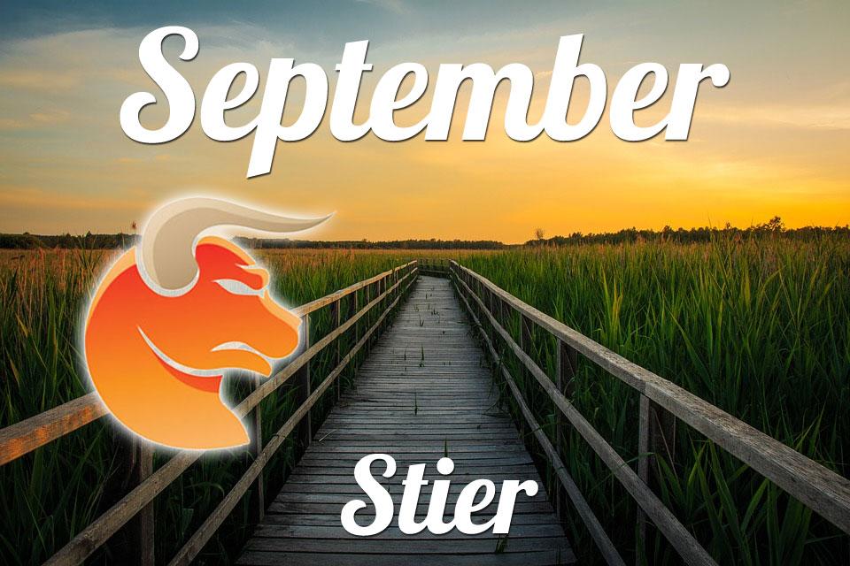 Stier September 2019