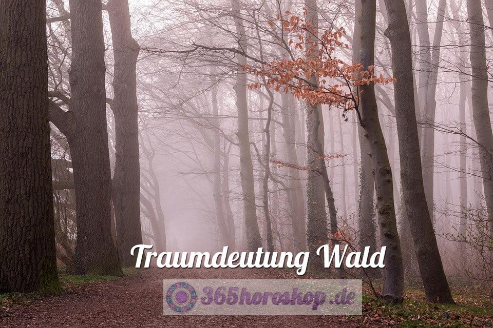 Traumdeutung Wald - Bedeutung Traumsymbol Wald